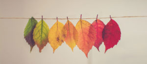 different colour leaves on a string