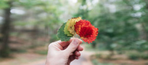 hand holding red, yellow and green leaves